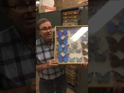 Entomology Collection with Shawn Clark