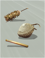 Hawaiian artifacts that are in the BYUH Archive include 1. a feathered kāhili that has a number of feathers, either from chickens or other birds, that were woven or sewn together and put onto a stick to indicate that a chief or chiefess was coming. 2. The pandanus basket, made from the leaves of the pandanus tree, was a common basket used to carry material for everyday use. 3. A nose flute or air instrument made from bamboo that would be held up to the player's nose. There are also three finger holes that would change the pitch of the note.