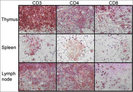 IHC-of-lymphoid-organs.png