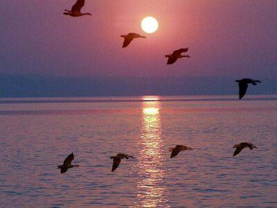 migratorybirds.jpg