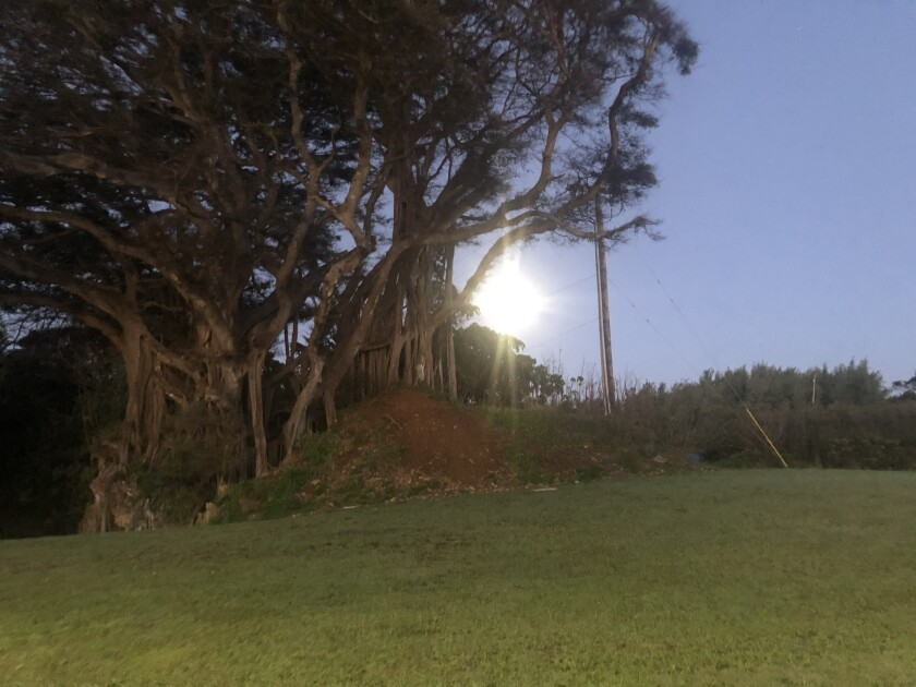 Light of the moon shining through the branches of a banyan tree on a green hill.