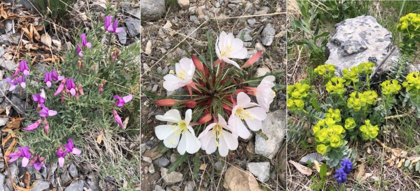 Slate Canyon Plants