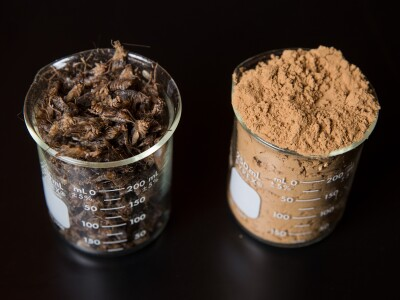 crickets-cricket flour.jpg