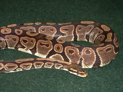 Monte the snake.jpg